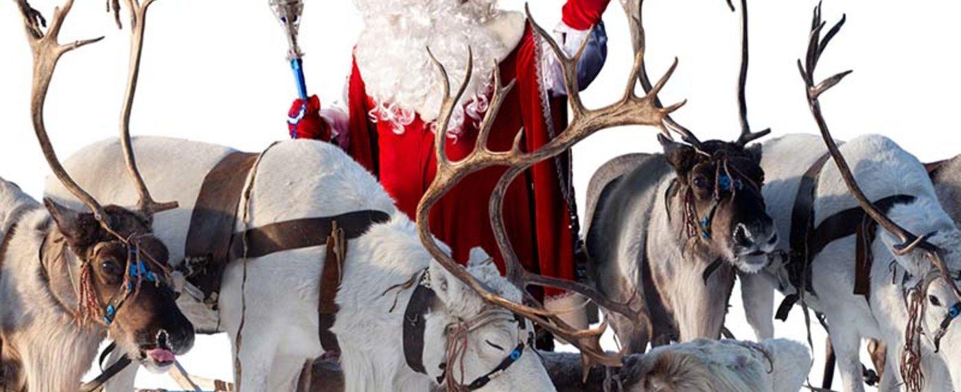 Come Si Chiamano Le Renne Di Babbo Natale.Le Renne Di Babbo Natale Nomi Storia E Caratteristiche Delle Renne Di Natale