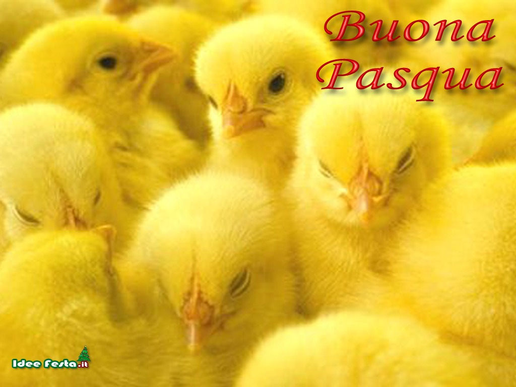 wallpaper pasqua